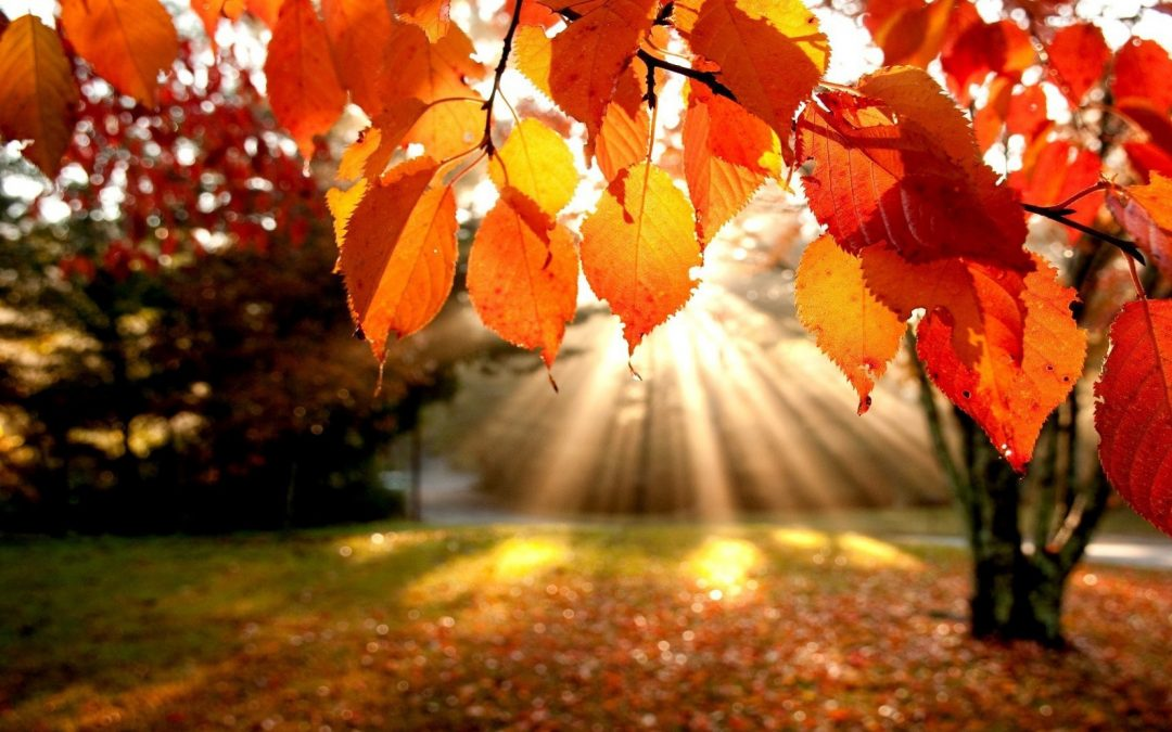 Fall Meditation – By Bill Crowell